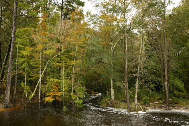 Jumping Run Creek at Carver's Creek State Park in Spring Lake on Monday, Oct. 12, 2020.