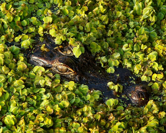 Plants in or near Florida waterways can provide important habitat for many species.