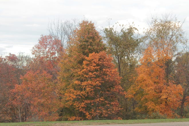 Fall colors are nearing their peak at Salt Fork State Park.