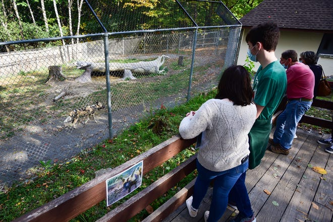 Guests visit the new African painted dog exhibit on Oct. 10 at the Utica Zoo. Due to a 107-day closure of the facility earlier this year during the launch of its busy season, the zoo has a nearly $1 million budget shortfall according to zoo officials.