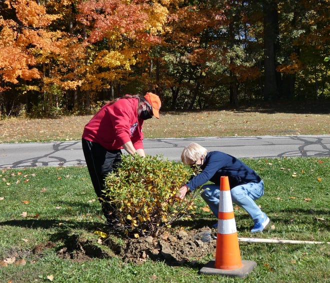 Jeff Panovich and Valerie Spreng of the Bucyrus Tree Commission plant a river valley birch tree in Aumiller Park Tuesday as part of the city's Arbor Day celebration.