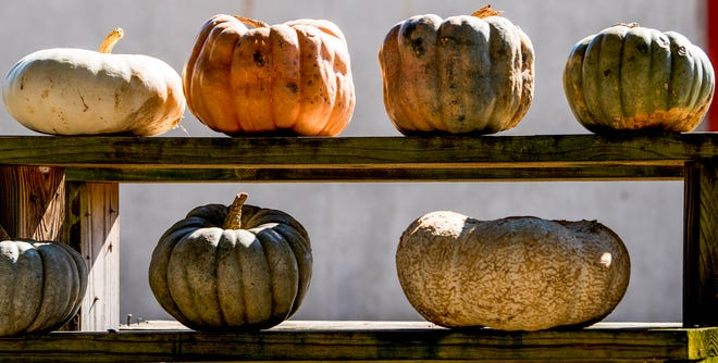 Pumpkins are not just for pie.