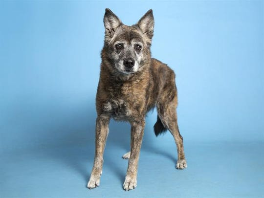 Interested adopters can view available pets, like Berra, and schedule an appointment online at azhumane.org/adopt.