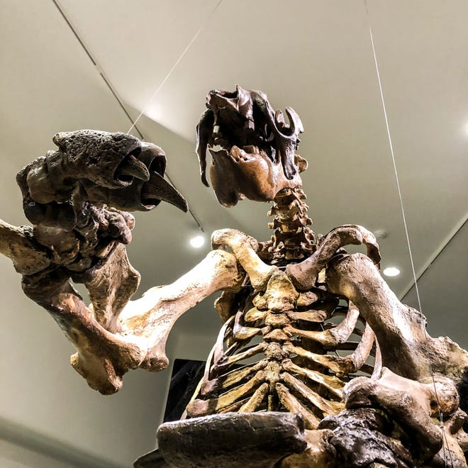 Giant sloth at MOAS