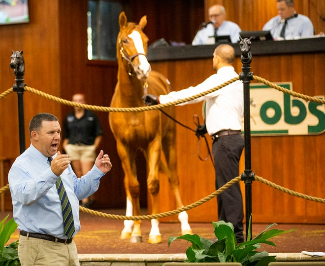 Ty McClary, left, finds a bidder for Hip No. 433 that sold for $29,000 on Wednesday during the two-day Ocala Breeders' Sales October yearlings sale.
