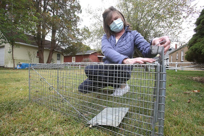 Barbara Betts is helping a group of southwest Massillon residents trap a colony of feral cats that will then be neutered, vaccinated and returned back to the neighborhood. Here Betts is shown with one of the traps.