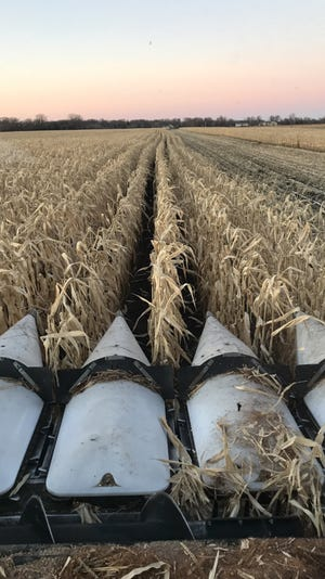 Wind damage or stalk rots can cause lodged corn that is difficult to gather with standard corn harvesting equipment.