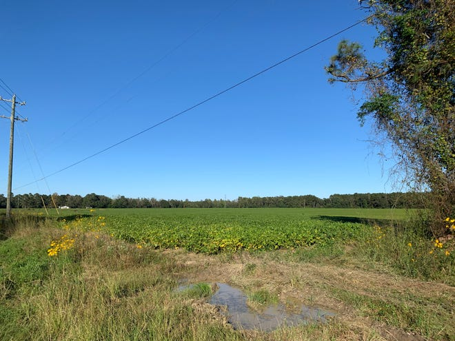 Pender County is in the process of acquiring this tract of land, which is slated to become a new park for the area.