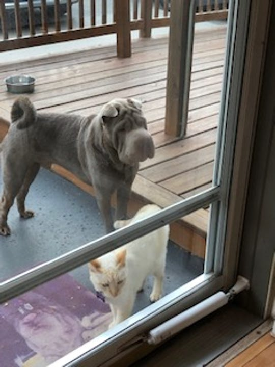 Chester and Butch would like to come inside now, please. Pretty please.