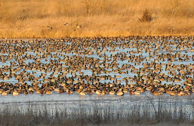 Scenes like this are possible because of Ducks Unlimited's work.