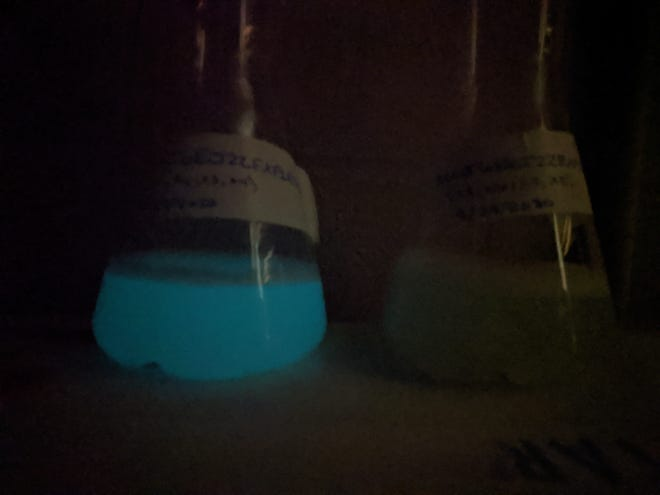 Dan Close of 490 Biotech submitted this image of glowing and non-glowing bacteria samples. The startup company has invented a technology that makes healthy cells glow brightly.