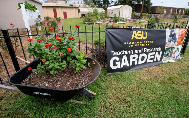 The Alabama State University teaching garden on the ASU campus in Montgomery, Ala., on Friday October 16, 2020.