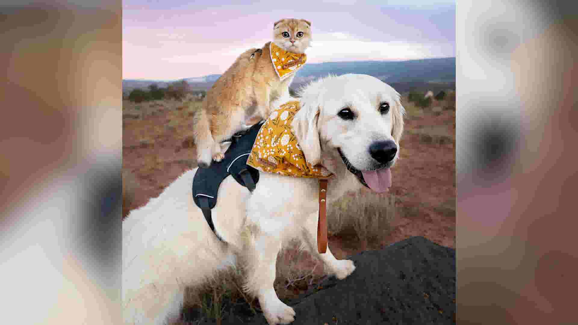 Golden retriever and tiny kitten travel the world