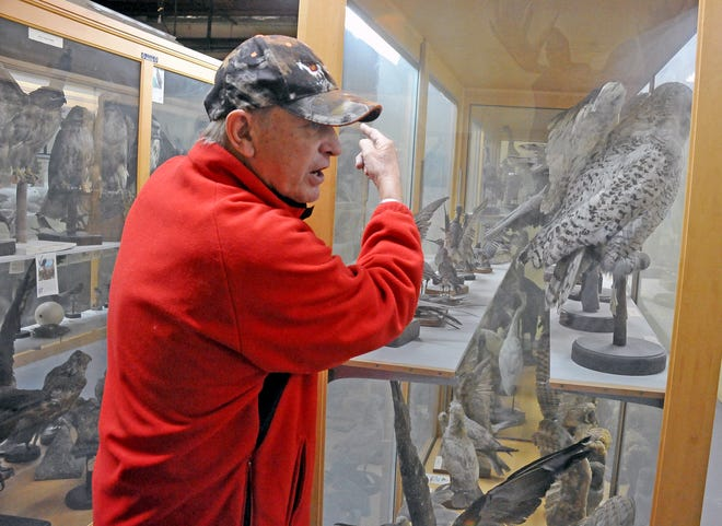 Bob Porter, museum curator,  talks about the various native animals on display at the Killbuck Valley Museum. The taxidermy creatures were killed and stuffed by Clarence F. Zuercher in the 1920s.