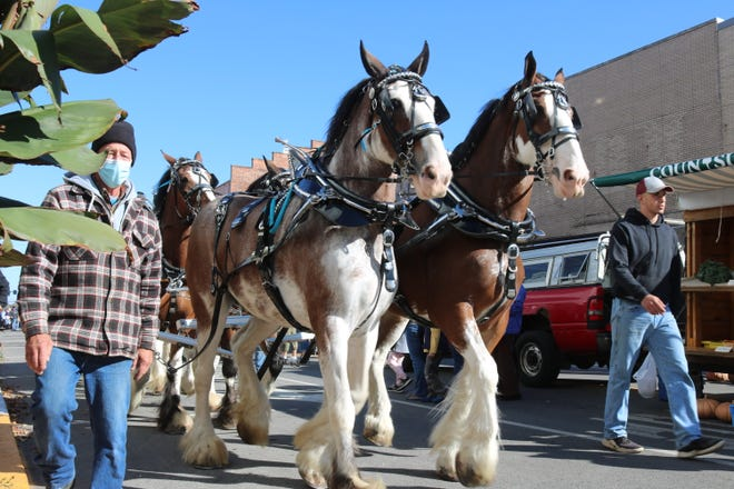 """The South Creek Clydesdales highlighted the Downtown Fremont Farmers Market """"Harvest Happenings"""" with a parade down Front Street."""