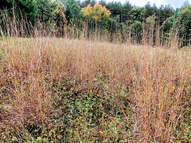 When Thomas Stewart homesteaded Jerry Apps' Roshara farm in 1867, he was greeted by Big Bluestem waving in the wind.