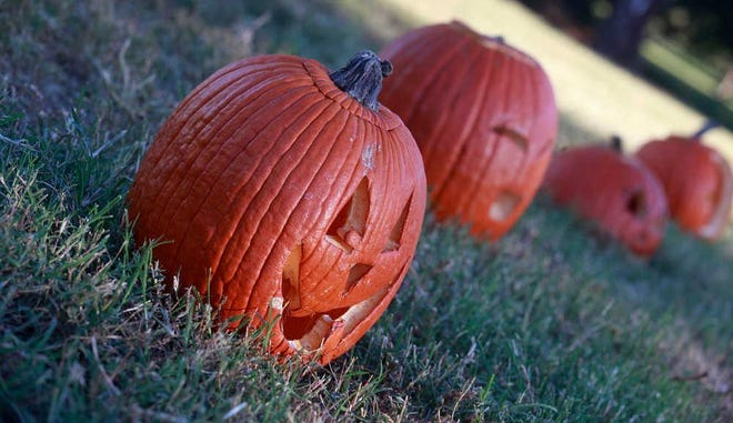 Lubbock Parks and Recreation is looking for 2,000 carved pumpkins to design this year's annual Pumpkin Trail at the Lubbock Memorial Arboretum that will debut Thursday.