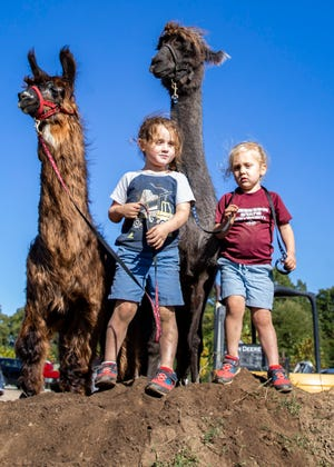 Brothers Cooper and Everett Van Zandt stand on top of a dirt hill with llamas and Chewy (brown) and Tito at Shelby Farms playground in Memphis, Tenn., on Friday, October 18, 2020.