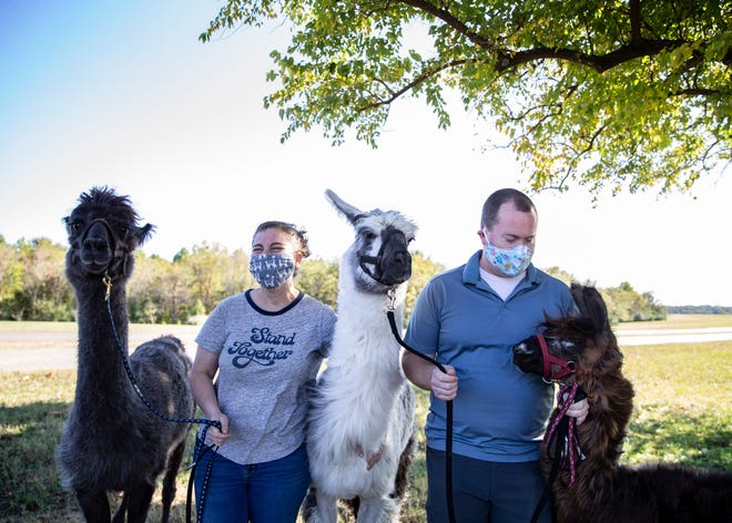 Whitney and Phillip Van Zandt pose with llamas Tito, Kaibab and Chewy at Shelby Farms playground in Memphis, Tenn., on Friday, October 18, 2020.