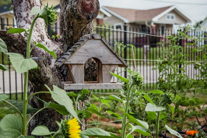 Studies have shown that spending time in a garden actually increases your mental health.
