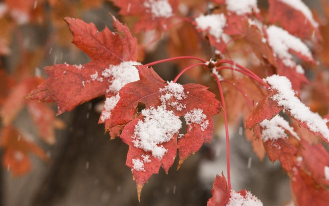 Snow piles up on a leaf Monday, Oct. 19, 2020, in St. Cloud.