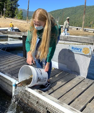 Volunteers in a bucket brigade deliver trout to stocking pens at Lake Siskiyou on Friday morning, Oct. 16, 2020.