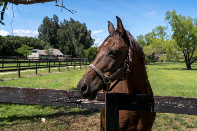 West Palm Beach officials fear manure odors from a proposed plant to recycle horse waste would waft over city subdivisions.