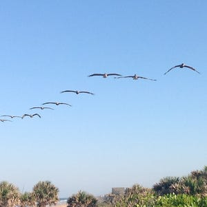Flying away from the beach.