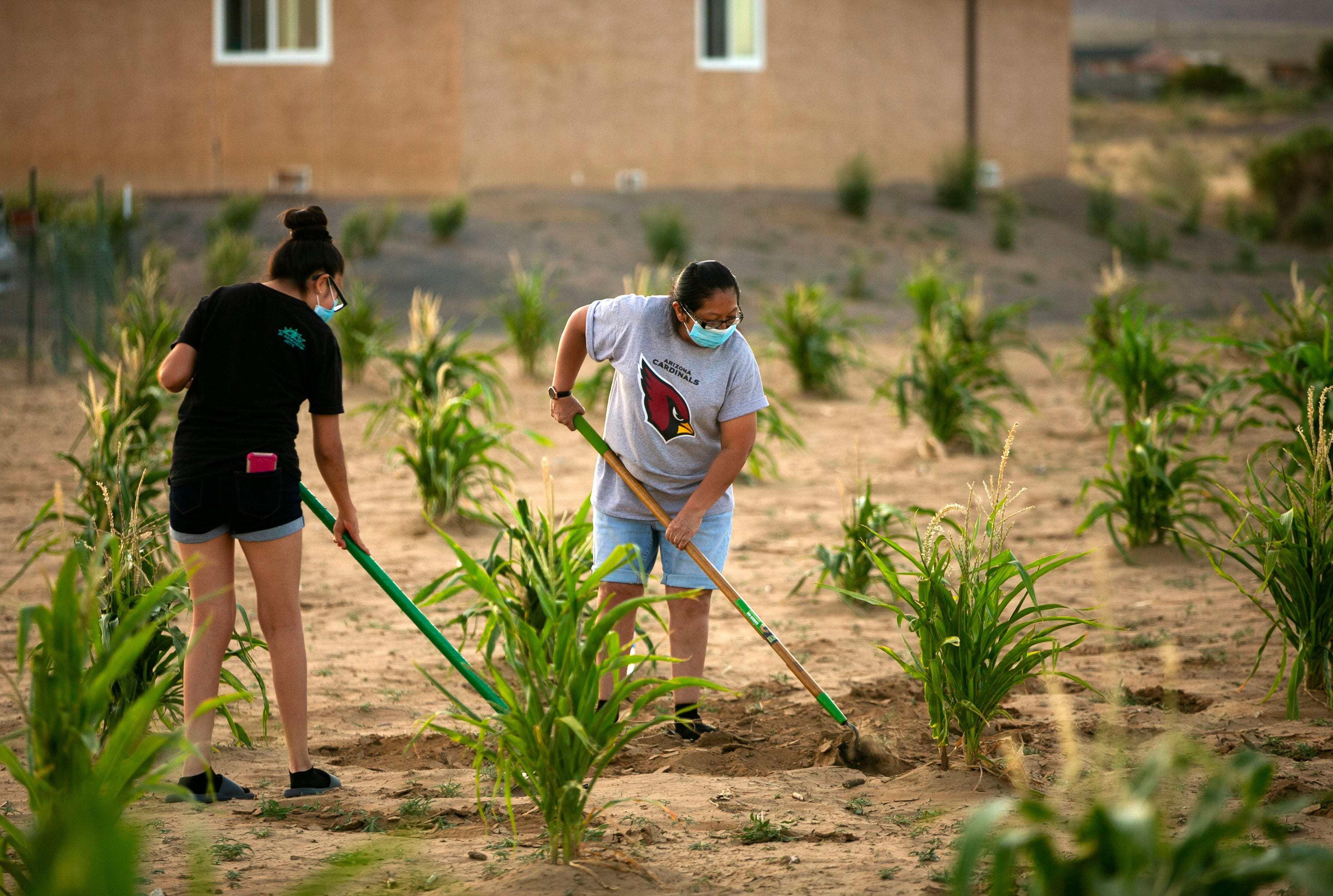 Recca Lomawaima, 15, and her mother, Rhonda Humeyestewa, hoe the soil around their sweet corn plants in Lower Mishongnovi on July 30, 2020.