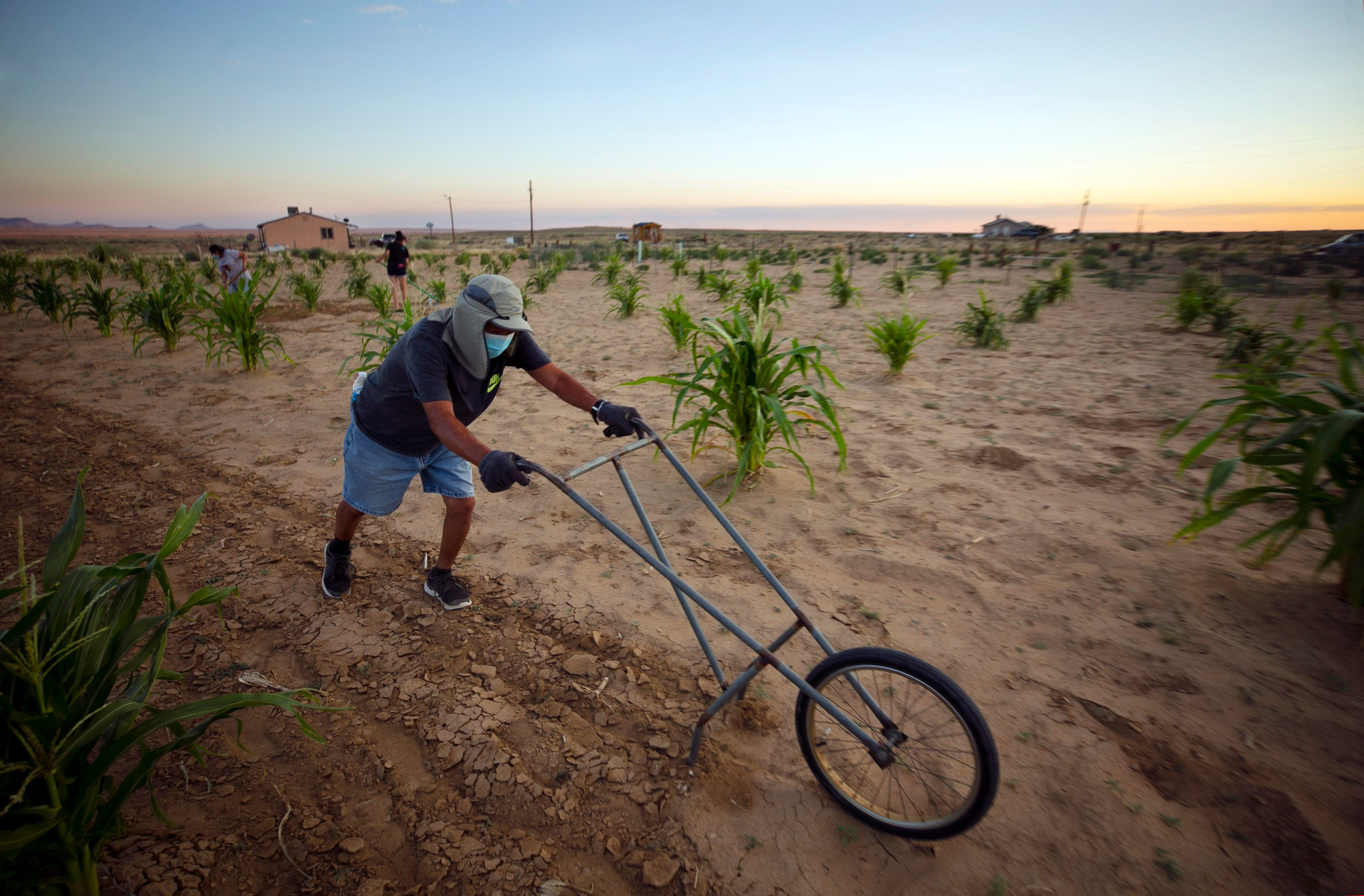 Ronald Humeyestewa uses a push-plow on July 30, 2020, to till the soil on his family's cornfield at their home below Second Mesa on the Hopi Reservation.
