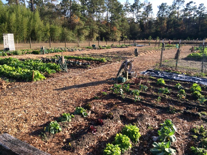 Gardeners at the Havana Community Garden rely on mulch for its many benefits.