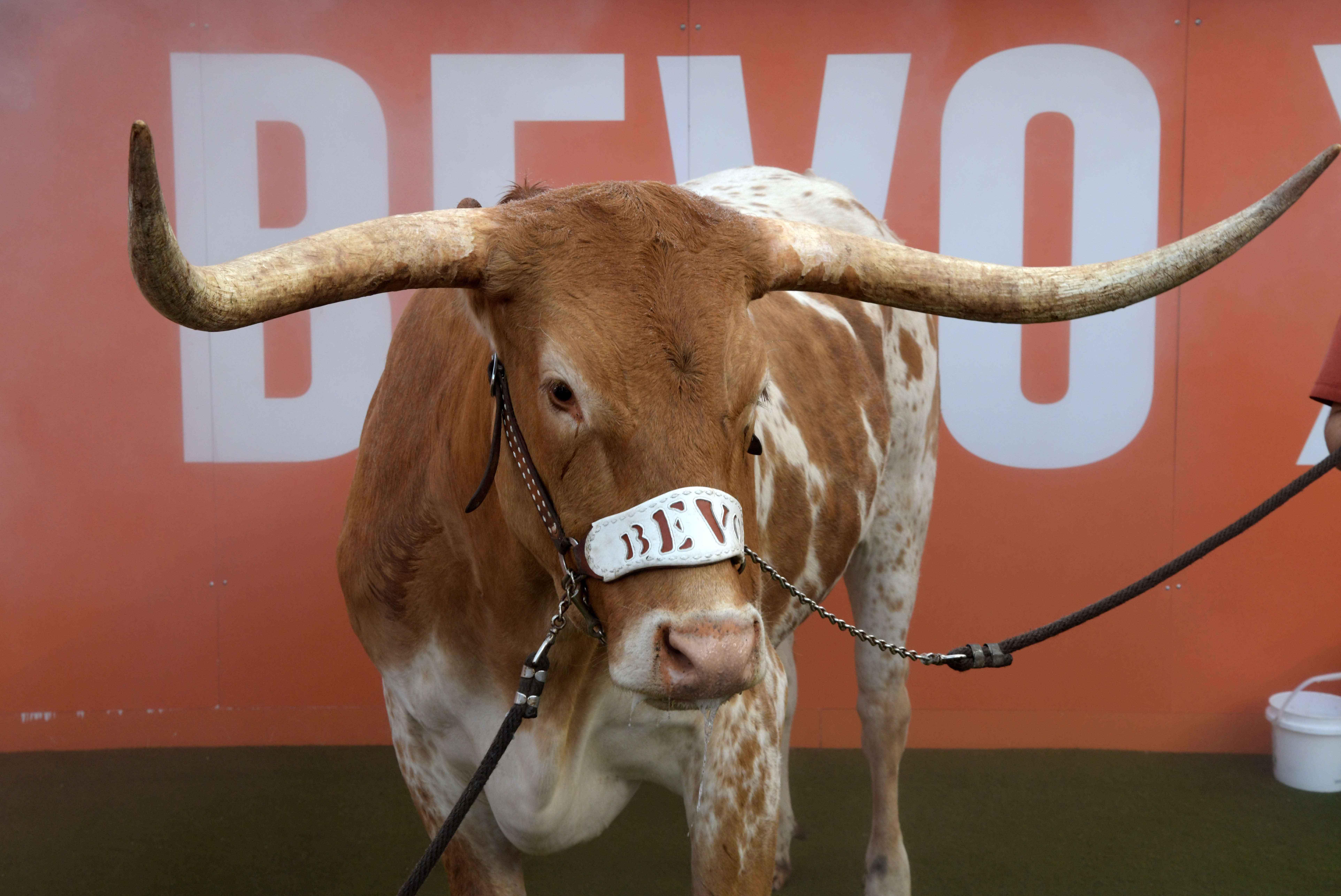 Photographer files lawsuit over Bevo XV's Sugar Bowl pregame incident