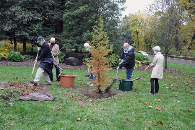 The city celebrated Arbor Day recently at Diller Park after postponing the spring celebration due to COVID-19. A 7-foot dawn redwood was planted in memory of Oliver Diller, who was the curator for Secrest Arboretum and helped Wooster to become a Tree City USA. Planting the tree are Urban Forestry board members (from left) Bob Romich; Chairman Steve Webster; Alan Keifer; Mayor Bob Breneman; and Karolyn Miller.