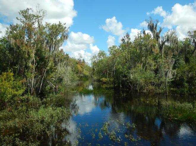 The Conservation Foundation of the Gulf Coast announces the permanent protection of 363 acres at the headwaters of the Myakka River in Myakka City.