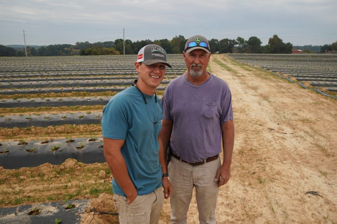 Robin Sleigh, right, stands with his son Ben Sleigh, left, next to the rows and rows of strawberry crops planted at H&S Farm in Clarksville, Tenn., on Friday, Oct. 9, 2020.