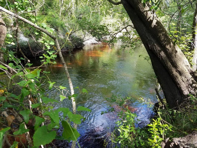 Black Creek near the Florida 16 bridge in Clay County is the area where the St. Johns River Water Management District wants to collect excess water to pipe to Keystone Heights. This photo was taken in 2018 by St. Johns Riverkeeper Lisa Rinaman.