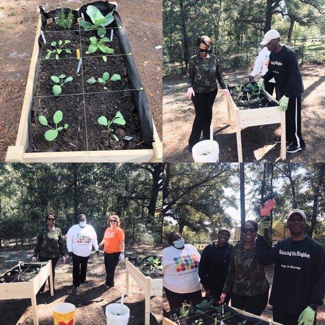 Turning Point paired with UF/IFAS Extension Family Nutrition Program to plant their first vegetables last week: broccoli, cabbage, radishes, turnip and collard greens, green onions, rosemary, and spearmint.