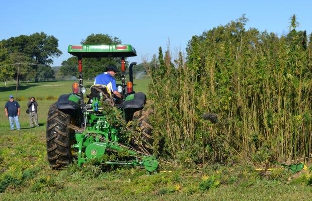 USDA is expanding the pilot Multi-Peril Crop Insurance plan for hemp.