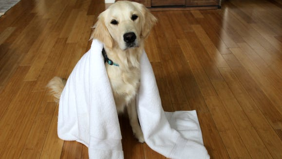 Even Camryn's dog Addy gives these towels two paws up.