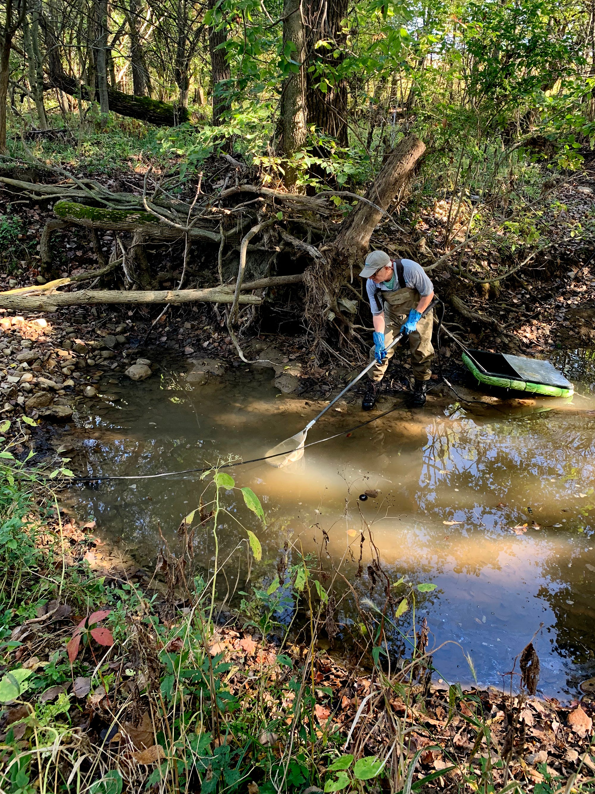 Martin Knapp, an aquatic ecologist, searches for bugs in a stream on Donna Schwab's property in North Lewisburg.
