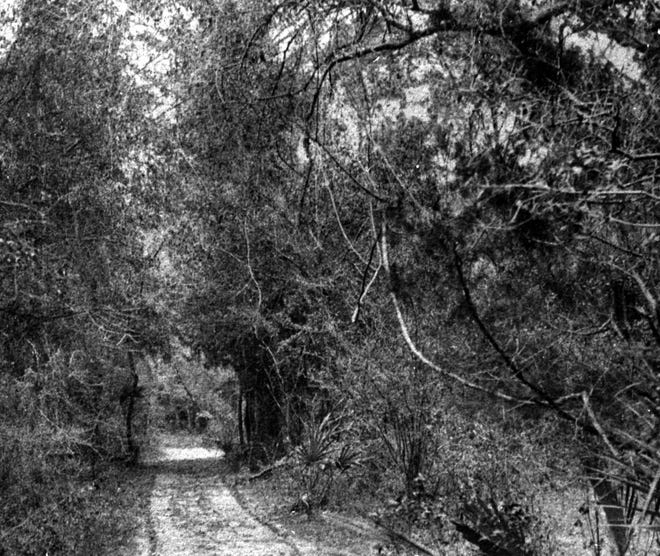 A photo of the road to Old Manatee Village, 1909-1910, from the Manatee County Public Library image archives.