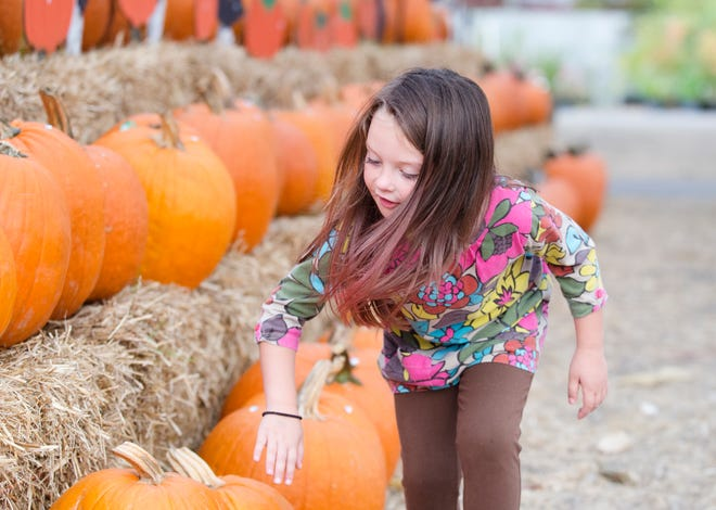 There are several places in the Fayetteville area to explore a corn maze or pick out a pumpkin.