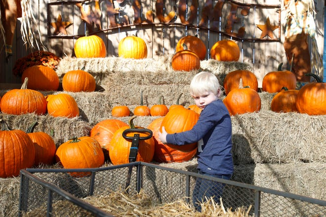 Landon Clark, 6, moves a pumpkin into a basket after picking one out at Ingram Farms on Watermelon Road on Wednesday, Oct. 25, 2017.    [Staff file photo]