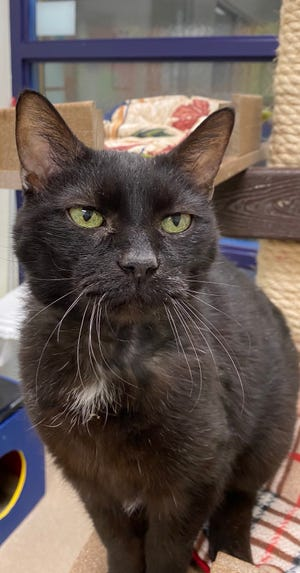 Jardena is an older girl waiting to be adopted at the Oshkosh Area Humane Society.