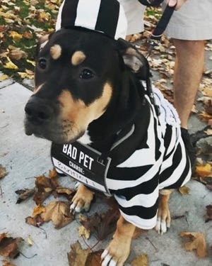 A canine dressed as an inmate makes the rounds for trick-or-treating in 2019.