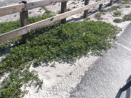 Experts are concerned the beach vitex, found on Pensacola Beach will harm wildlife. The plant is included on Florida's noxious weed list.