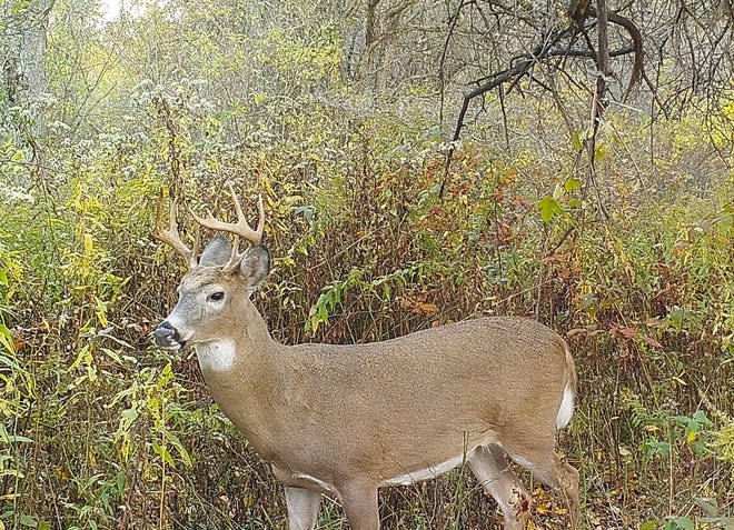 This buck should have been a 10 pointer, but already broke off the front of his right beam, making him an eight pointer.