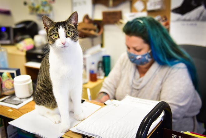 Piper the cat hangs out at the front desk with Mare Clarey at Clinton Pet Vet on Friday, Oct. 23, 2020.