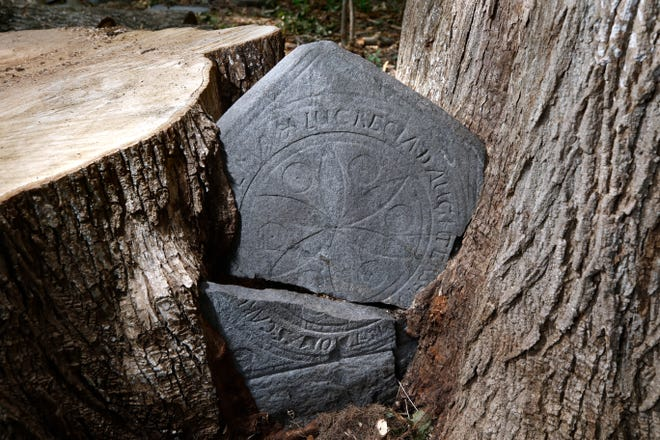 A couple restoring their house in Hopkinton, Rhode Island, removed the dead half of a double tree and found this small headstone nearly swallowed in the fork. It belongs in Norwich.