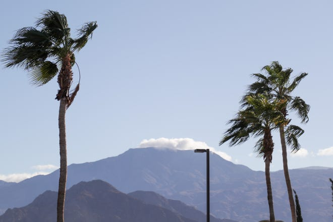 Palm trees blow in the wind in La Quinta, Calif. on Sunday, October 25, 2020.